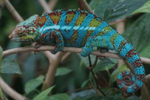 Adaptation and evolution