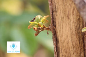 plant budding out of tree to represent new possibility with blue diamond logo